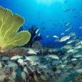 La fiebre del oro que amenaza a los mares
