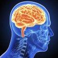 Qué es la inteligencia y de dónde proviene