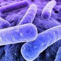 Microbios terrestres viajan por el Sistema Solar