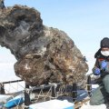 Hallan sangre líquida en los restos de un mamut