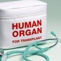 Primer paso para desarrollar órganos humanos