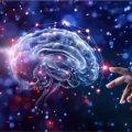 Una red computacional de múltiples cerebros