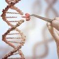 EEUU autoriza la manipulación genética en humanos - CRISPR