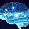 Descubrimientos del cerebro - Diferencias entre real / imaginado