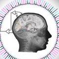 Adivinan lo que ves, por tu actividad neuronal